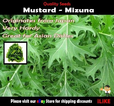 Mustard Mizuna 100 Seeds Minimum Vegetable Garden Herb. Japanese Origin.