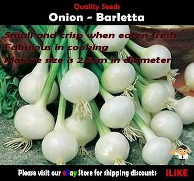 Onion Barletta 100 Seeds Minimum Vegetable Garden Plant. Great Versatile Onion.