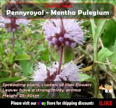 Pennyroyal Menthan Pulegium 100 Seeds Minimum Vegetable Garden Herb. Medicinal.