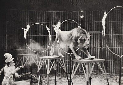 1940's Vintage 11x14 CIRCUS LION Rings Of Fire Animal Trainer Ringling Bros. Art