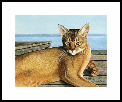 """""""THE ABY"""" Abyssinian Framed Artist Proof CAT ART PRINT CATMANDREW DREW STROUBLE"""