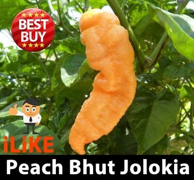 Hot Chilli Pepper Seeds Peach Bhut Jolokia x 10 One Of The Worlds Hottest.
