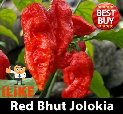 Bhut Jolokia/Ghost Pepper Chilli Seeds Red x 10 One Of The Worlds Hottest