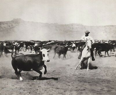 1908/52 Vintage WESTERN COWBOY COW Cattle Roundup 11x14 Photo Art ERWIN E. SMITH