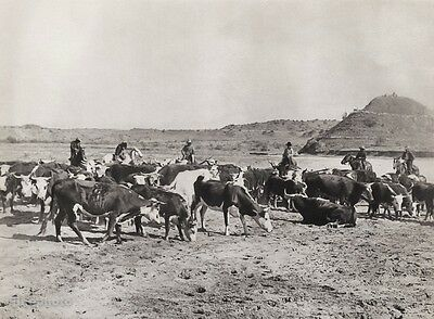 1908/52 Vintage WESTERN COWBOY HORSE Cattle Cow 11x14 Photo Art ~ ERWIN E. SMITH