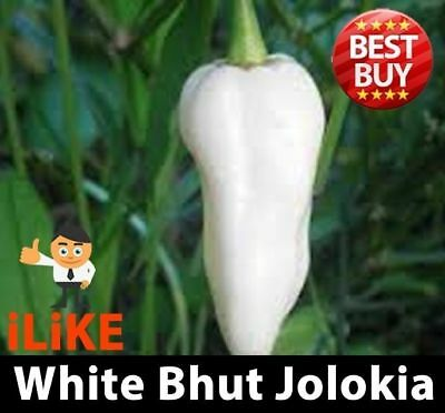 Bhut Jolokia/Ghost Pepper Chilli Seeds White x 20 One Of The Worlds Hottest !