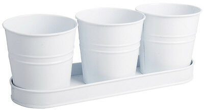 3 Lovely White Collection Windowsill Herb Pots in a Tray by Fallen Fruits