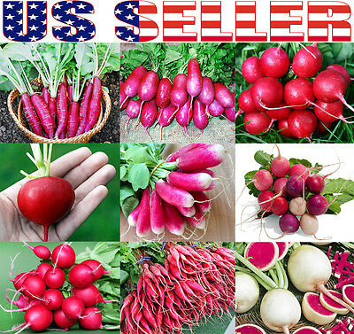 100+ ORGANICALLY GROWN Radish MIX 9 Varieties Seeds Heirloom NON-GMO Delicious