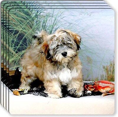 Havanese Rubber Coaster Set