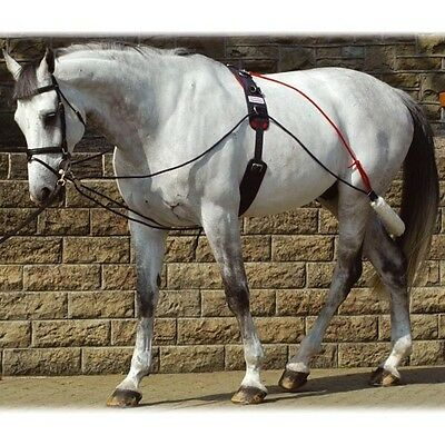 John Whitaker Complete Training System With Roller One Size