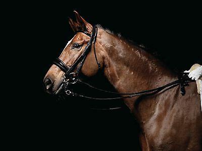 Caldene  Patent Padded Dressage Weymouth Double Bridle CD4727