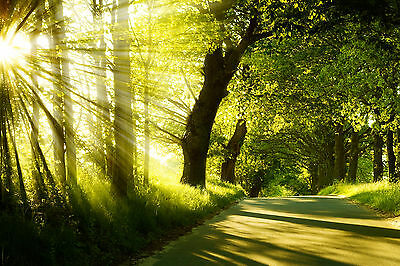 Nature Trees Country Road Sunlight WALL ART CANVAS FRAMED OR POSTER PRINT