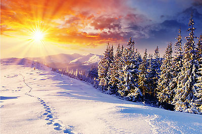 Winter Forest Mountain Trees Snow Sunrise WALL ART CANVAS FRAMED OR POSTER PRINT