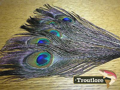 "FLY TYING FEATHERS - PEACOCK TAIL EYES x10 NATURAL HERL 10-12"" - NEW"