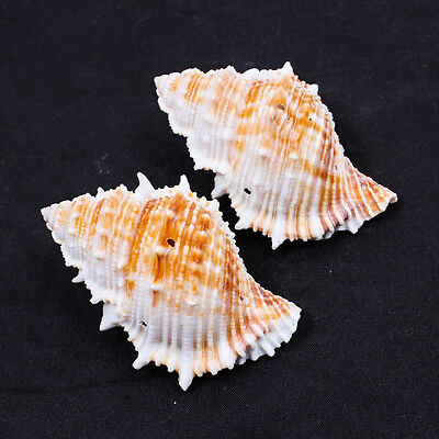 Natural Conch Thai SEA SHELL Ocean Craft DIY Jewelry Beads 3-Holes Drilled A1287