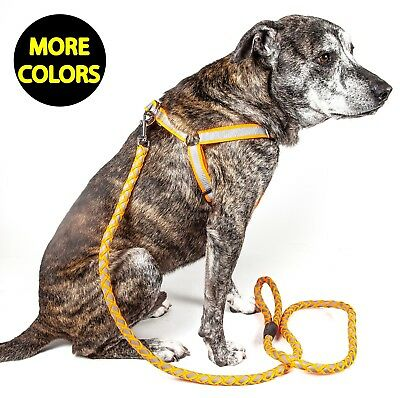 Reflective Stitched Easy Tension Adjustable 2-in-1 Pet Dog Leash and Harness