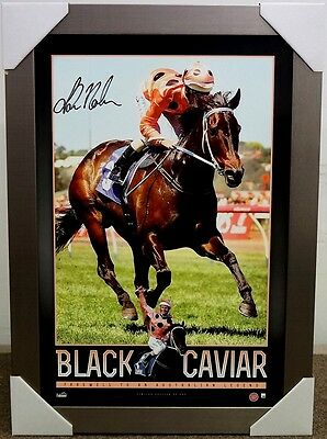 Black Caviar Signed Horse Racing Retirement Print Framed - Luke Nolen
