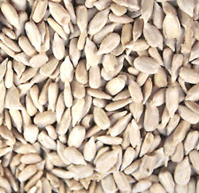 SUNFLOWER HEARTS 20 kg NO HUSKS FEED ALL YEAR ROUND FREEPOST