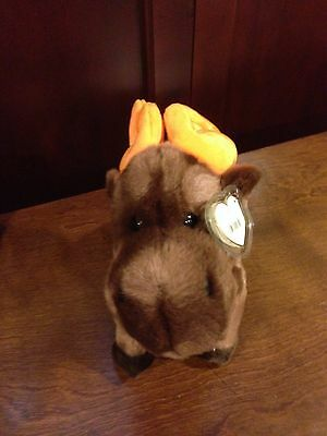 Retired Ty Beanie Buddy Chocolate The Moose  Mint With Tags