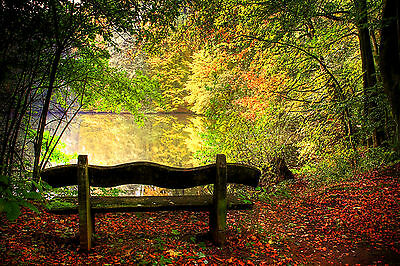 Autumn Trees Bench Lake Relax Sunlight WALL ART CANVAS FRAMED OR POSTER PRINT