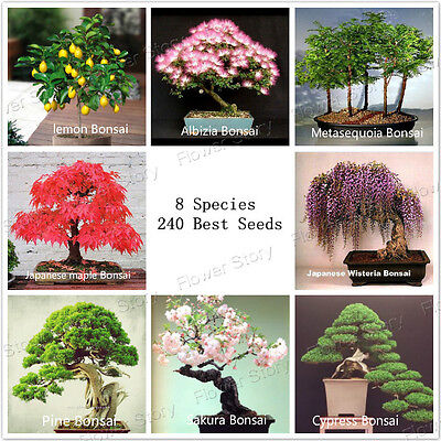 220 DIY Home Garden Bonsai Tree Seeds 8 kinds Perfect  Package  Free Shipping