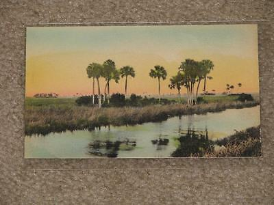 Florida Everglades-Hand Colored, Unused