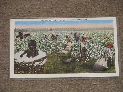 Picking Cotton--Down In Sunny Dixie, Early 1900`s, Unused
