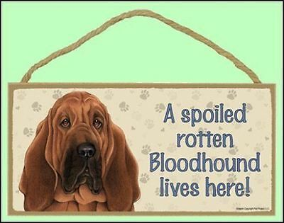"""A Spoiled Rotten Bloodhound Lives Here 10"""" x 5"""" Dog Sign"""