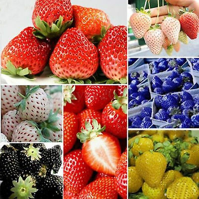 100 PCS Strawberry Seeds Nutritious Delicious Blue Black Green Fruit Vegetables