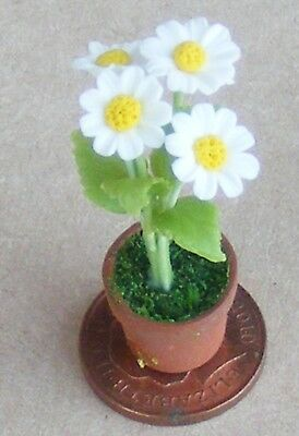 1:12 Scale Daises In White /& Gold Ceramic Jardiniere Tumdee Dolls House Flowers