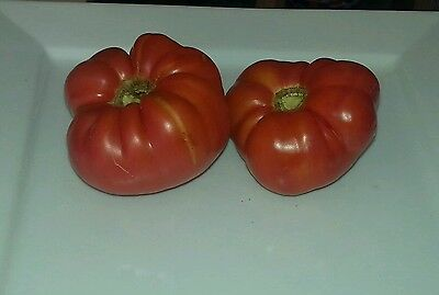 TOMATO 'Mortgage Lifter' Aunty K's Heritage Seeds, 60 Organic heirloom seeds