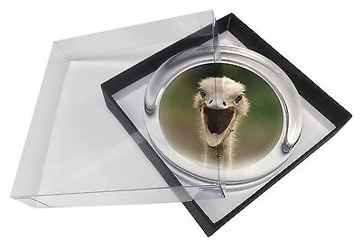 Ostritch Photo Print Glass Paperweight in Gift Box Christmas Present, AB-OS1PW