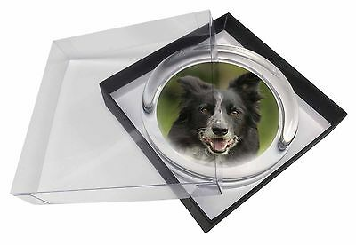 Border Collie Dog Glass Paperweight in Gift Box Christmas Present, AD-BC11PW