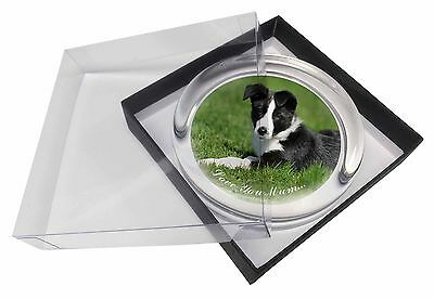 Border Collie Dog 'Love You Mum' Glass Paperweight in Gift Box Chr, AD-BC14lymPW