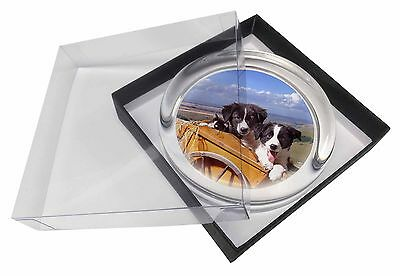 Border Collie Puppies Glass Paperweight in Gift Box Christmas Present, AD-BC18PW