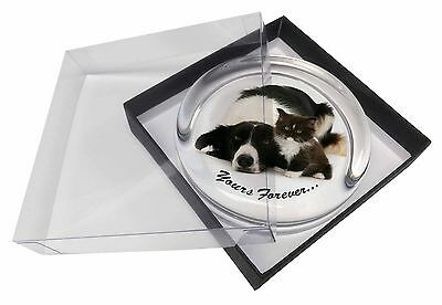 Border Collie and Kitten 'Yours Forever' Glass Paperweight in Gift Box, AD-BC7PW