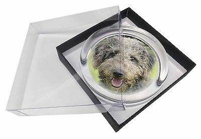 Beddlington Terrier Dog Glass Paperweight in Gift Box Christmas Prese, AD-BED1PW