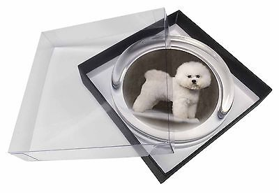 Bichon Frise Glass Paperweight in Gift Box Christmas Present, AD-BF5PW