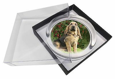Bloodhound Dog Glass Paperweight in Gift Box Christmas Present, AD-BL1PW