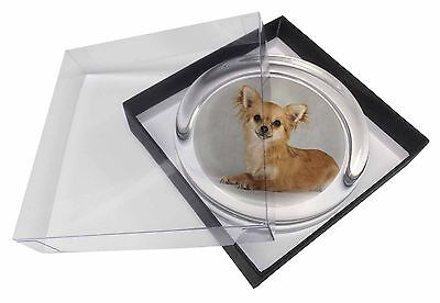 Chihuahua Glass Paperweight in Gift Box Christmas Present, AD-CH6PW