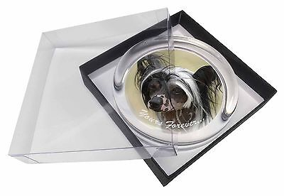 "Chinese Crested Dog ""Yours Forever..."" Glass Paperweight in Gift Box, AD-CHC2yPW"