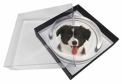 Border Collie Puppy Glass Paperweight in Gift Box Christmas Present, AD-CO45PW