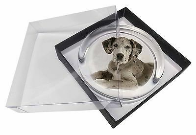 Great Dane Glass Paperweight in Gift Box Christmas Present, AD-GD2PW