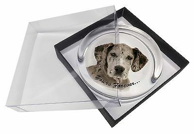 Great Dane Dog 'Yours Forever' Glass Paperweight in Gift Box Christma, AD-GD2yPW