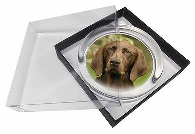 German Pointer Dog Glass Paperweight in Gift Box Christmas Present, AD-GSP1PW