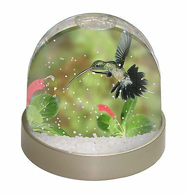 Green Hermit Humming Bird Photo Snow Dome Waterball Stocking Filler Gif, AB-95GL