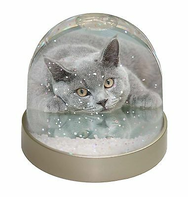 British Blue Cat Laying on Glass Photo Snow Dome Waterball Stocking Fil, AC-11GL