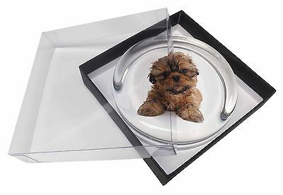 Shih-Tzu Dog Glass Paperweight in Gift Box Christmas Present, AD-SZ4PW