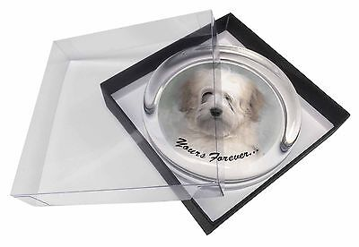 Tibetan Terrier 'Yours Forever' Glass Paperweight in Gift Box Christm, AD-TT1yPW