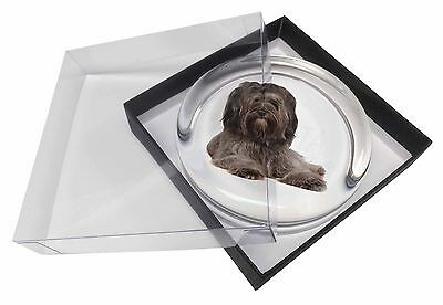 Tibetan Terrier Dog Glass Paperweight in Gift Box Christmas Present, AD-TT2PW